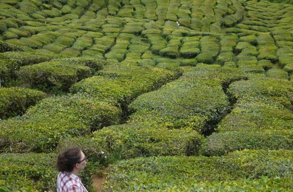 Blog: Cameron Highlands to Bangkok 2011 > Six months living out of a small backpack…